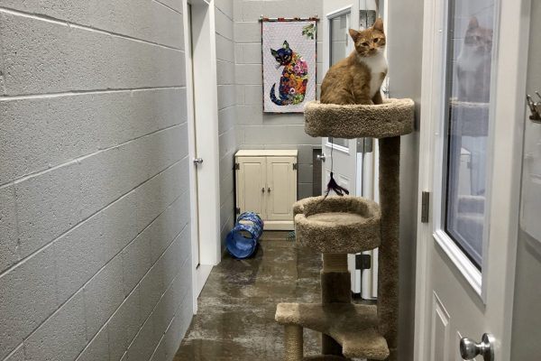 3 private cat boarding rooms with a corridor for individual play time.